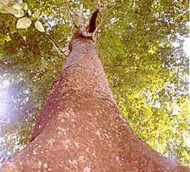 tarasy drewniane gatunki drewna DENYA