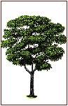 tarasy drewniane gatunki drewna DOUSSIE