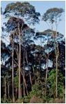 tarasy drewniane gatunki drewna MERANTI
