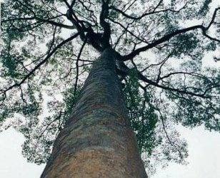 deska tarasowa gatunki drewna PUNAH