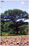 tarasy drewniane gatunki drewna WENGE