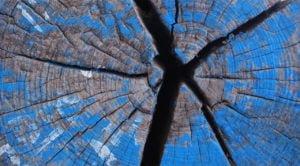 Drewno to Pasja - zapach i faktura na zdjęciu