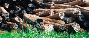 Drzewo Teakowe na Tarasy Drewniane zdjećie drzew