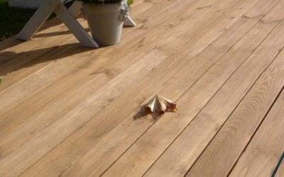 tarasy drewniane gatunki drewna TERMODREWNO