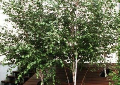Zabudowa tarasu obudowa drzewa