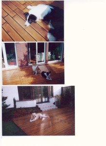 Taras z Desek Bangkirai zdjęcie z psami